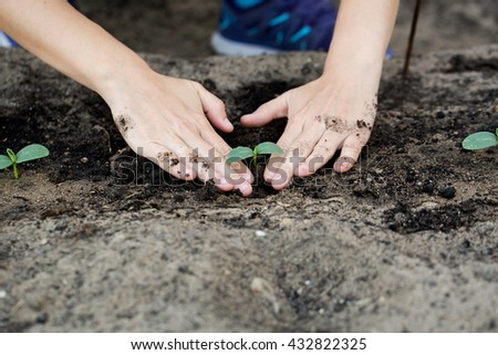 Woman hands planting the young plant while working in garden.