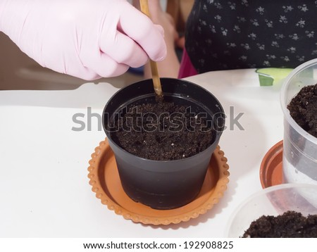 Woman hands prepare for cultivating home flowers at home - stock photo