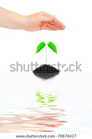 Woman hands protecting small green plant - stock photo