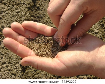 woman hands sowing dill seeds - stock photo