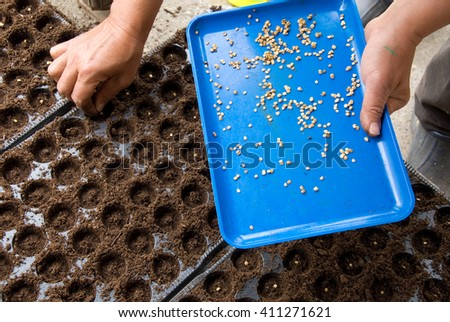woman hands sowing seeds - stock photo