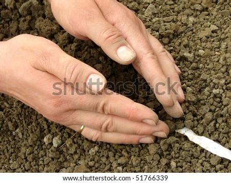 woman hands sowing seeds on the tape - stock photo
