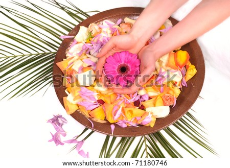 Woman Hands Spa with flower petals and natural ingredients - manicure concept - stock photo