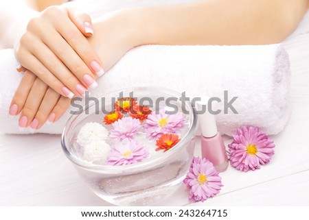 Woman hands with colorful chrysanthemum on a white - stock photo