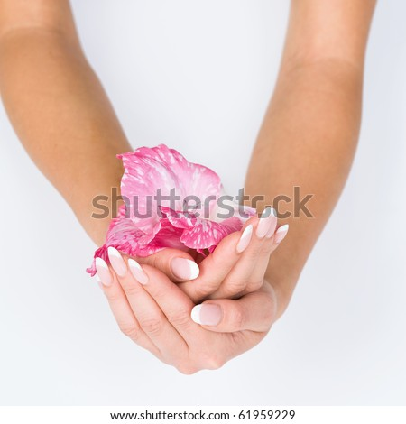 Woman hands with french manicure holding pink flower close-up - stock photo