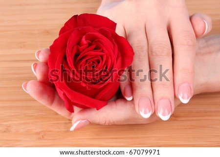Woman hands with french manicure holding red rose - stock photo
