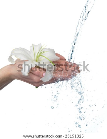 Woman hands with lily and stream of water. On white background. Very high resolution. - stock photo