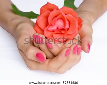 Woman hands with pink manicure holding scarlet rose