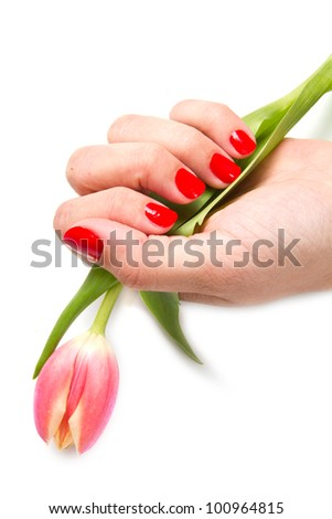 Woman hands with red manicure and tulip - stock photo
