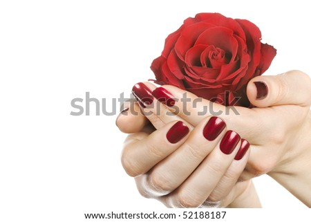 Woman hands with red rose on white. Space for text. - stock photo