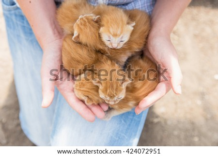 woman holding a baby four kittens, Four red kitten, close-up - stock photo