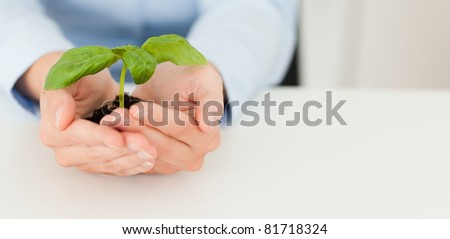 Woman holding a little plant in her hands - stock photo