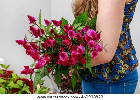Woman holding bunch of celosia flowers.