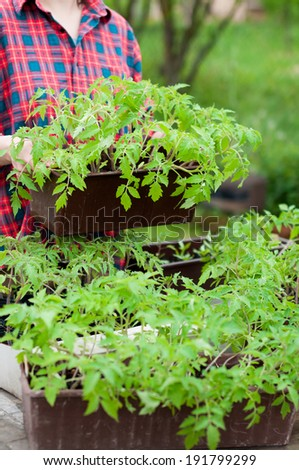 Woman holding crate with tomato seedlings