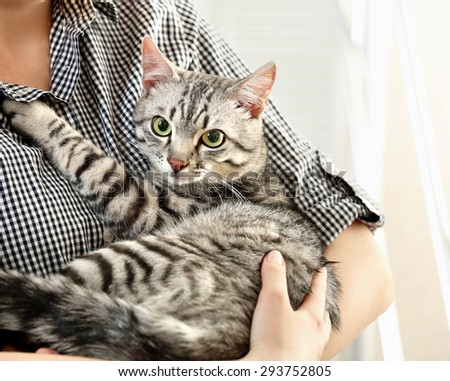 Woman holding cute cat close up - stock photo