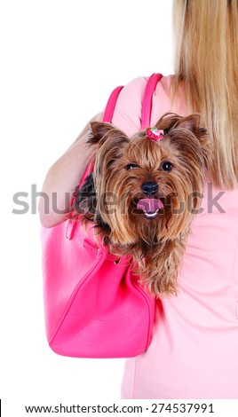 Woman holding cute Yorkshire terrier in bag isolated on white