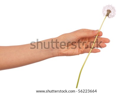 Woman holding fluffy blowball in the hand