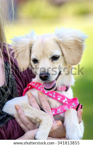Woman Holding Her Dog on Hands