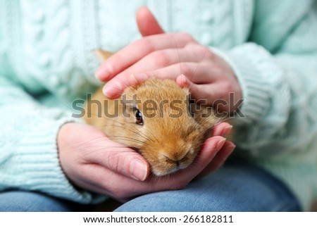 Woman holding little cute rabbit, close up