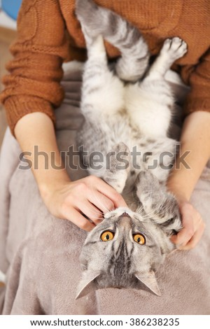 Woman holding lovely grey cat, close up
