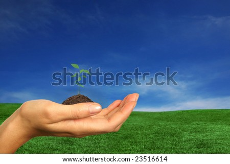 Woman Holding one of Earths Renewable Source, Trees