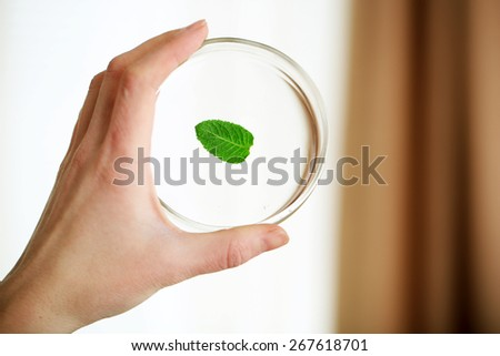 Woman holding Petri dish with green leaf, close up - stock photo