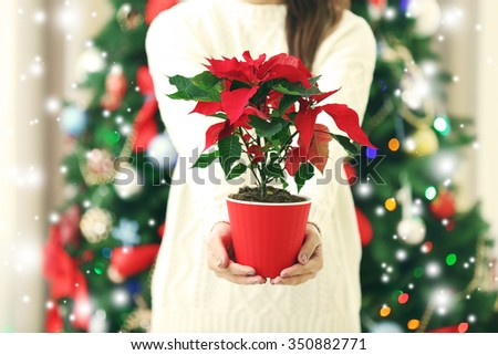 Woman holding pot with Christmas flower poinsettia on light background with falling snow effect - stock photo