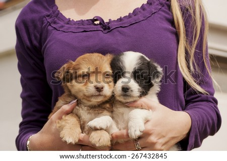 Woman holding puppies - stock photo