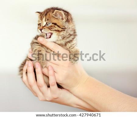Woman holding small cute kitten - stock photo