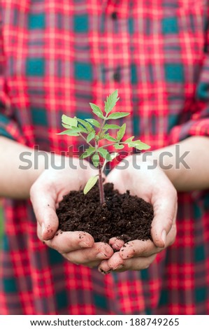 Woman holding tomato seedling
