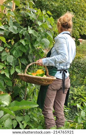 woman in her garden harvesting vegetables  in a basket