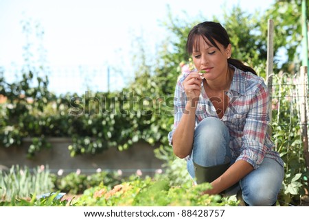 Woman in herb garden - stock photo