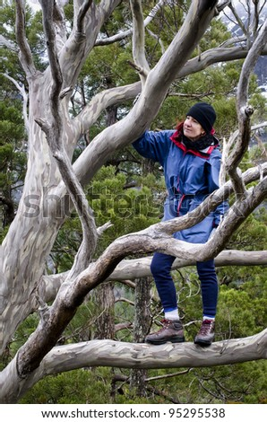 Woman in outdoor jacket standing in eucalyptus tree. Cradle Mountain, Tasmania, Australia - stock photo