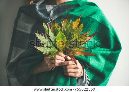 Woman in warm woolen green check scarf or blanket holding Autumn fallen leaves in her hands. Fall cosy mood lifestyle concept