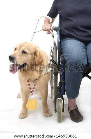 Woman in wheelchair with guide dog isolated on white - stock photo