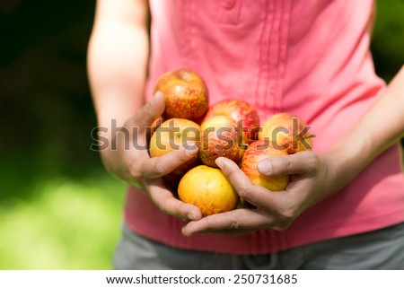 Woman is holding fresh apples in both hands under sunshine.