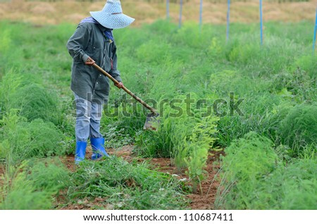Woman is working in agricultural field.