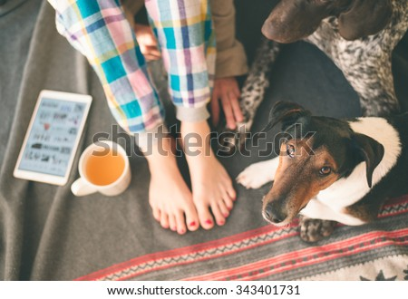Woman legs and two dogs lying on bed, tea and tablet on her side. Cute terrier and German pointer looking at camera. - stock photo