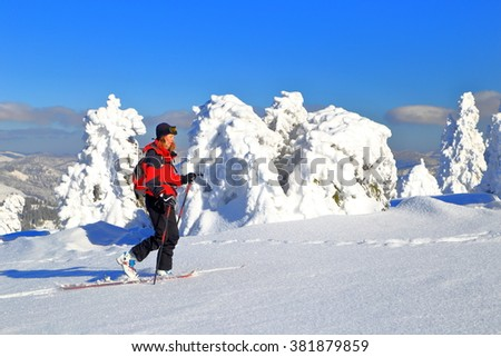 Woman mountaineer climbs on touring skis surrounded by snow covered pine trees - stock photo