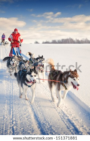 Woman musher hiding behind sleigh at sled dog race on snow in winter - stock photo