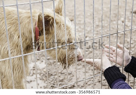 Woman petting stray dogs, kennel for stray animals - stock photo