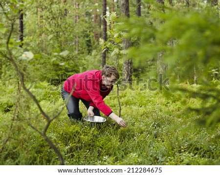 Woman pick up blueberries in the woods - copy space