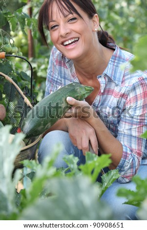Woman picking a cucumber on her vegetable patch - stock photo