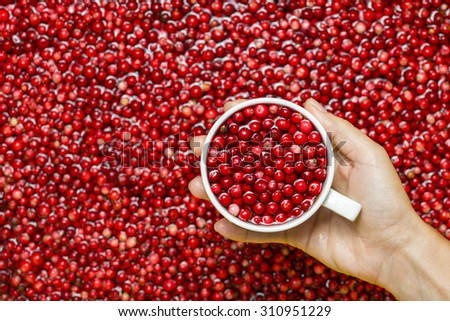 Woman picking berries in a white cup. - stock photo
