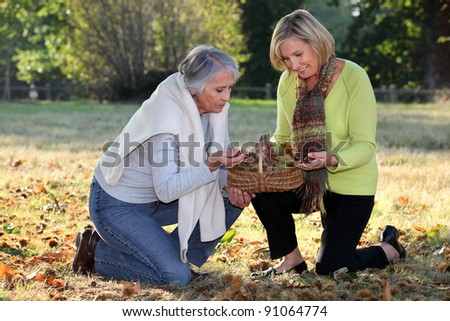 Woman picking chestnuts - stock photo