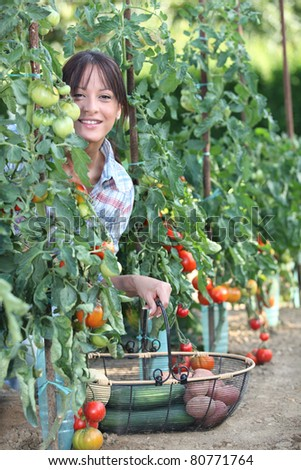 Woman picking fresh tomatoes and other vegetables - stock photo