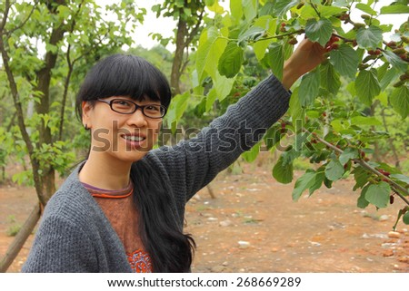 Woman picking mulberries in the orchard - stock photo