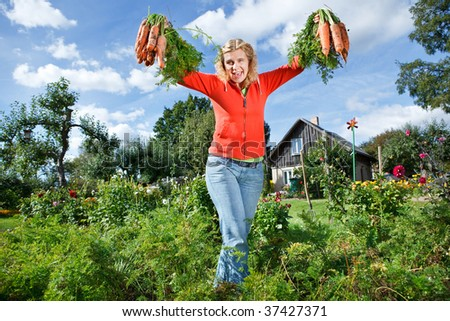 Woman picking organic carrots from her own vegetable garden - stock photo