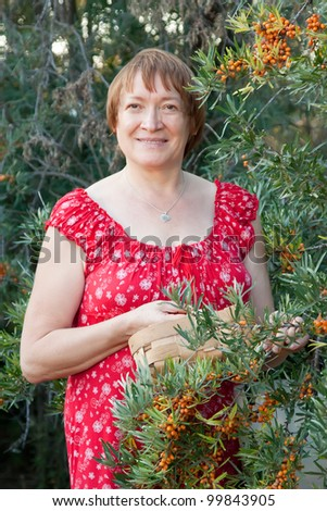 Woman picking seabuckthorn  in the plant