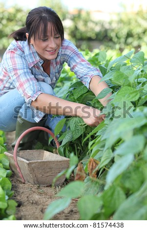 Woman picking vegetables - stock photo